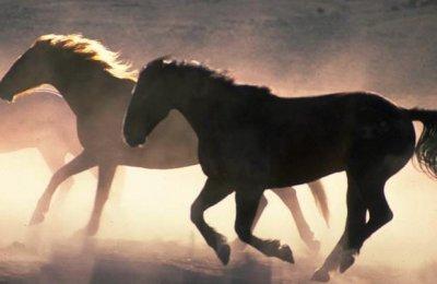 horserun.jpg